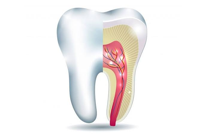 How Much Does A Root Canal Treatment Cost?